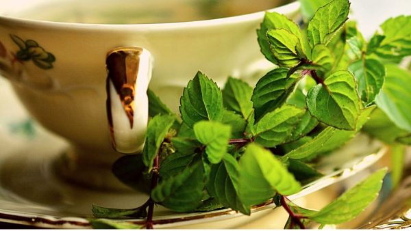 white and gold china cup with mint leaves on saucer